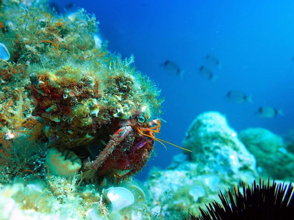 La composición en foto subacuática.