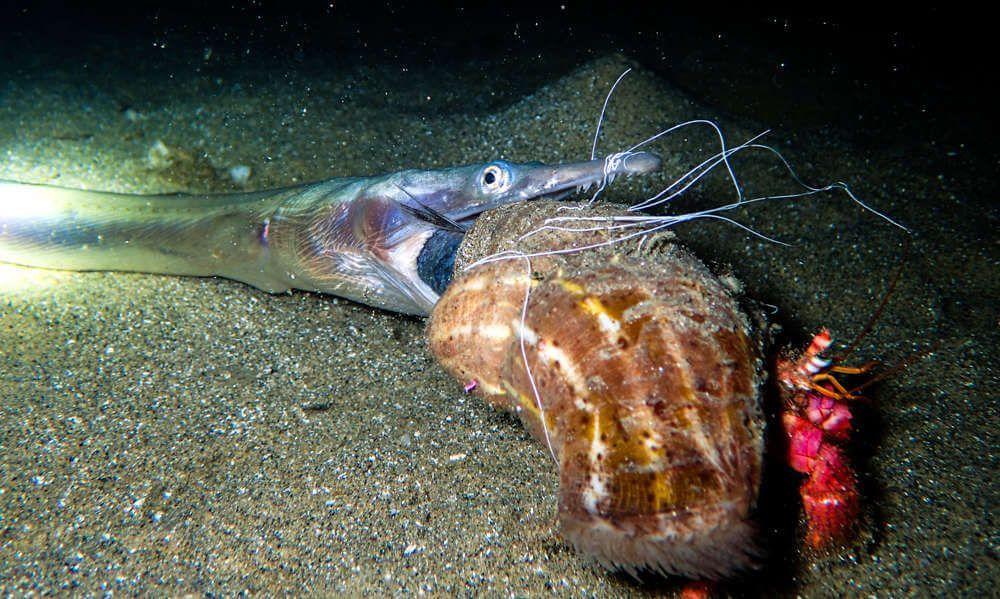 Iniciacion a la fotografia submarina