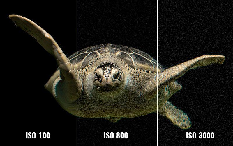 ISO modo manual fotografia submarina