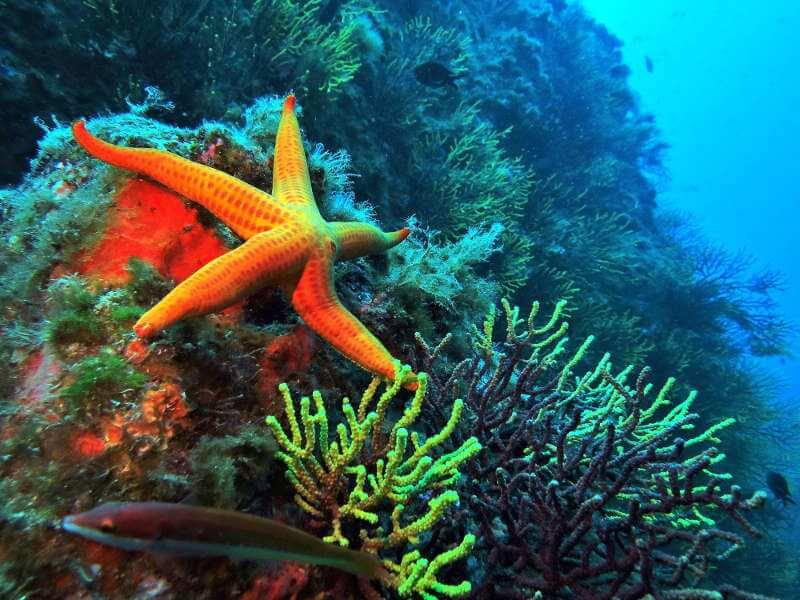 16 lugares buceo costa brava vacaciones (7)