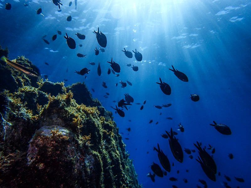 iniciación-fotografía-submarina-(58)