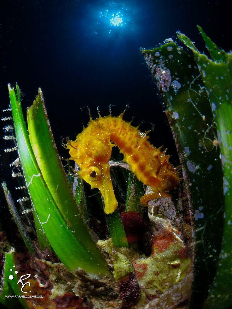 Charlas submarinas #01. Rafa Cosme, fotosub especialista en cámaras compactas.