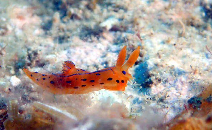 Cómo fotografiar nudibranquios y no morir en el intento