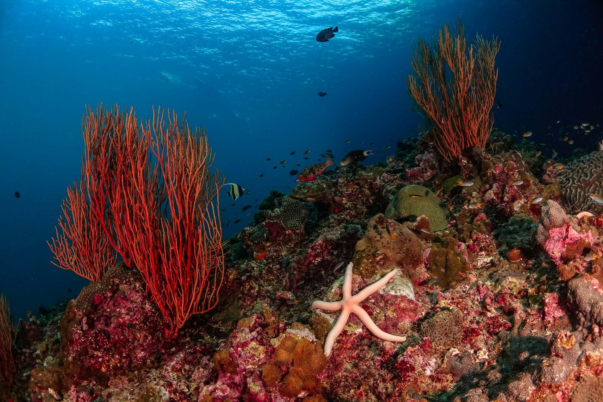 paisaje submarino, aprender fotosub