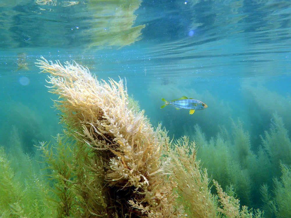 Fotografia submarina con luz natural