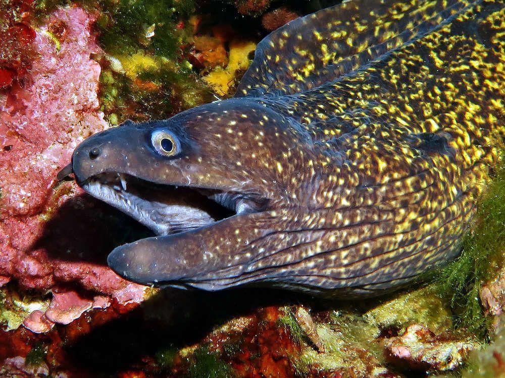 fotografía submarina con cámara acuática