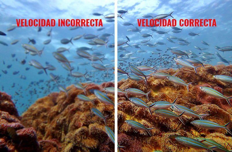 velocidad-modo-manual-fotografia-submarina-low