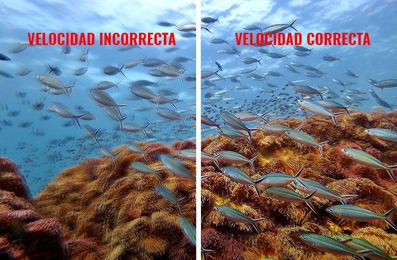 El modo manual en la fotografía submarina: la velocidad de obturación