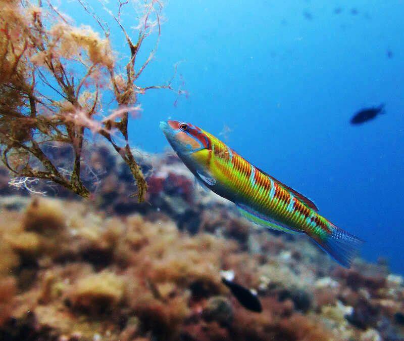 Talasoma-composicion-fotografia-submarina