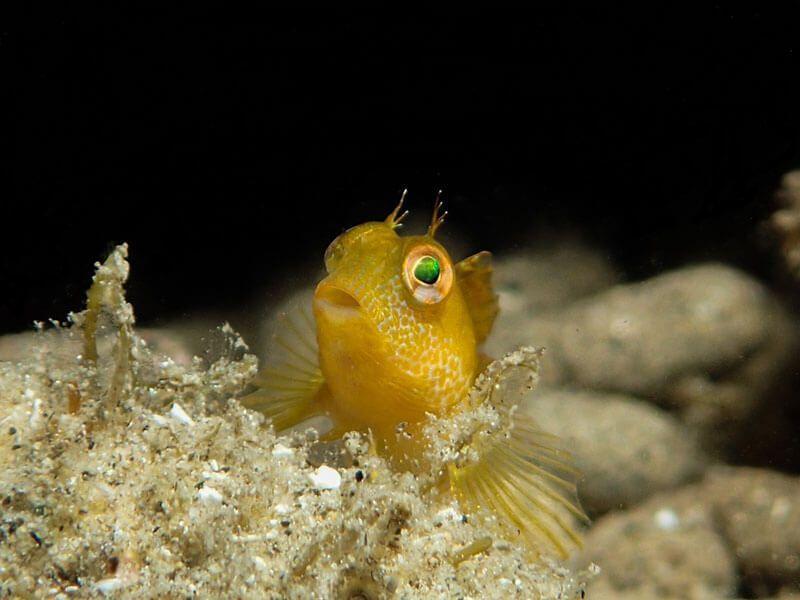 iniciación-fotografía-submarina-(43)