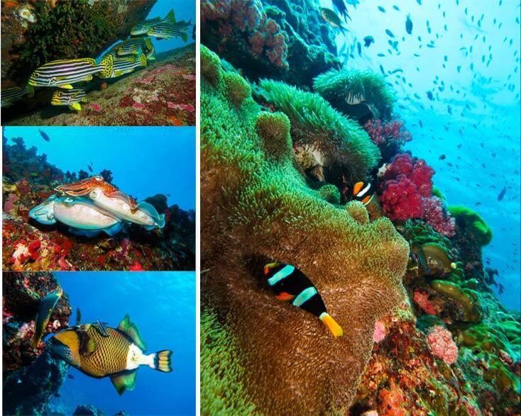 buceo-en-islas-similan-tailandia-vida-marina