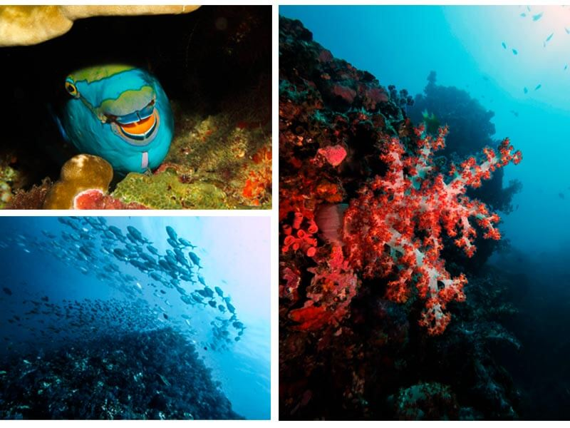 buceo-en-islas-similan-vida-marina