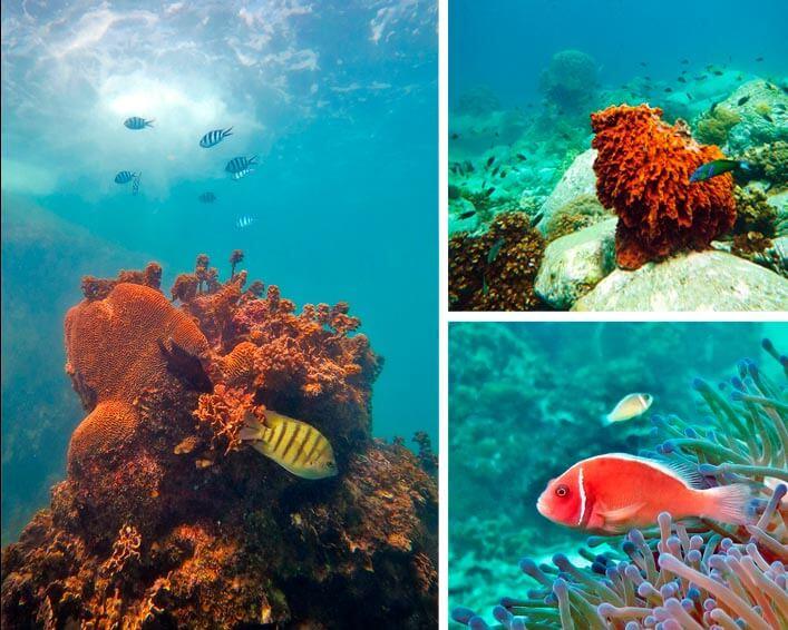 buceo-koh-tao-tailandia-vida-marina