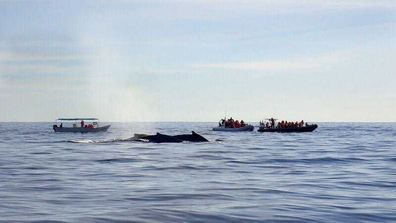 Cola de ballena jorobada. Foto de Viajar Buceando.