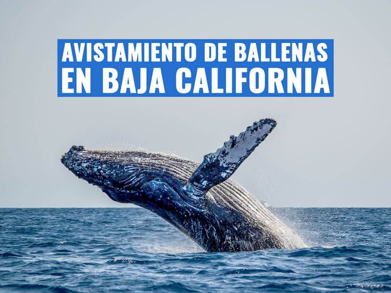 mexico-bcs-avistamiento-ballenas