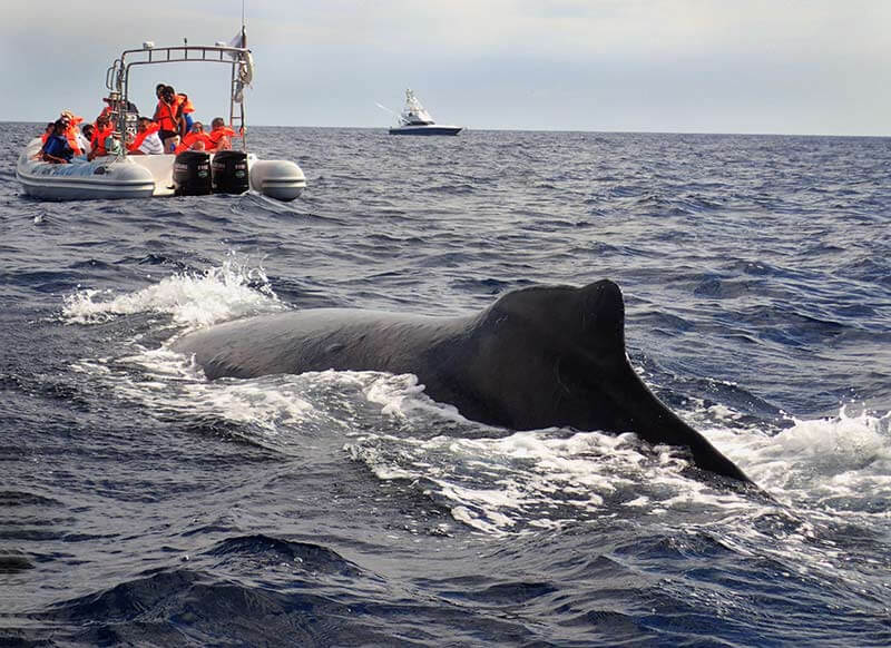 ver-ballena-jorobada-(27)