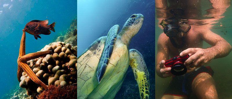 Buceo-en-baja-california-snorkel-la-paz