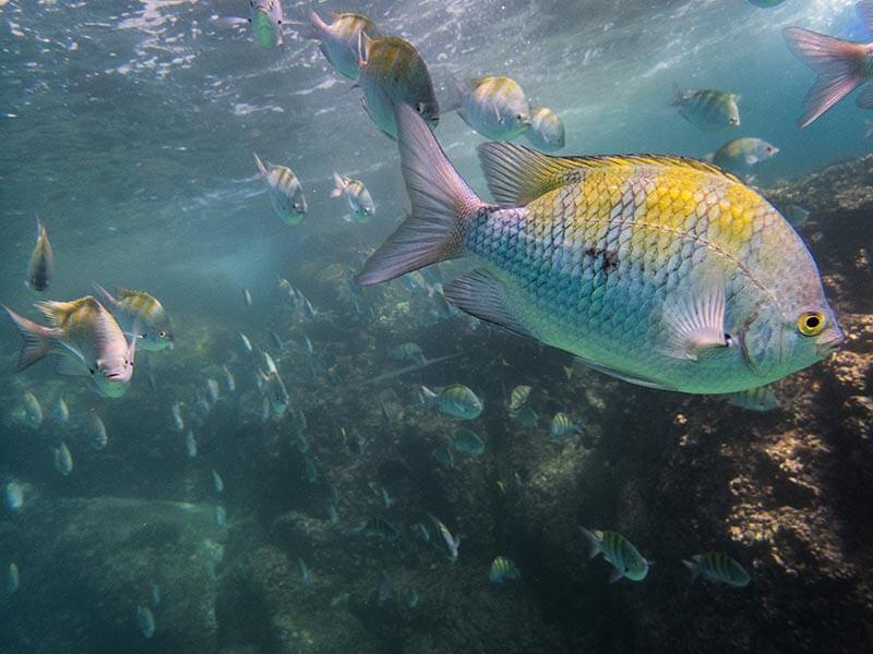 buceo-en-baja-california-fondos-marinos