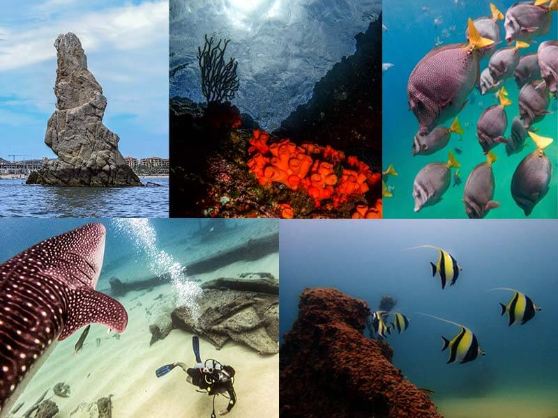 buceo-en-baja-california-inmersiones-cabo-san-lucas