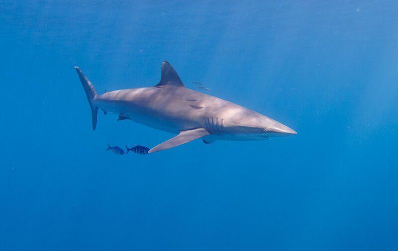 buceo-en-baja-california-nado-con-tiburones