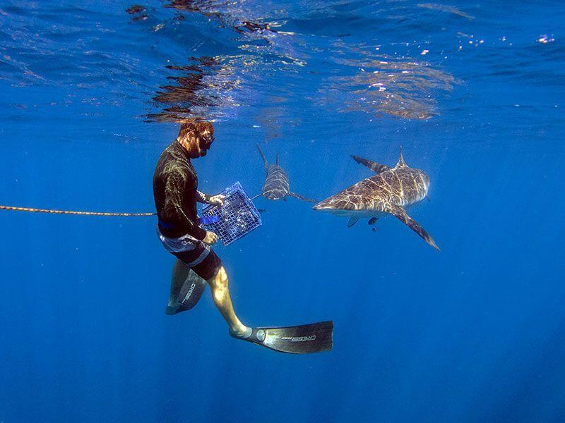 buceo-en-baja-california-nado-tiburones