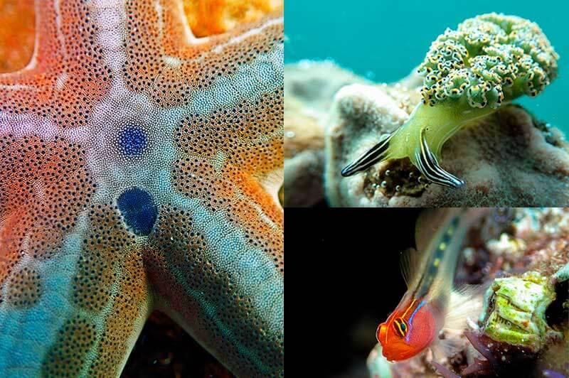 buceo-en-baja-california-snorkel-en-la-paz-fauna