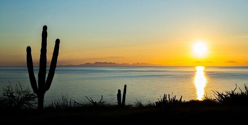 buceo en baja california_cardón columnar