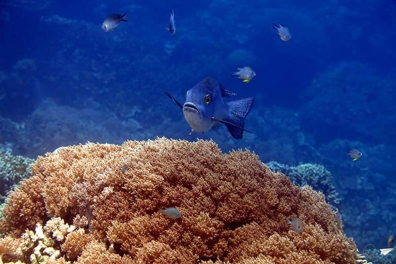 primera-inmersion-bucear-en-filipinas-claudia-solo-ida