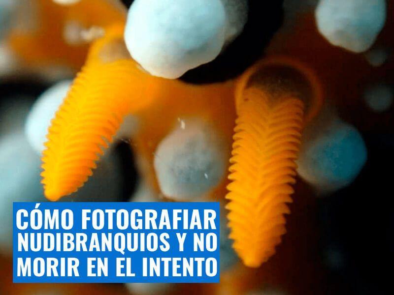 Cómo-fotografiar-nudibranquios-y-no-morir-en-el-intento-2