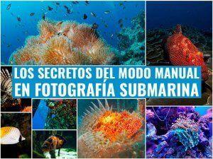 Modo-manual-en-fotografia-submarina