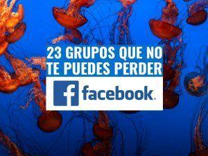 grupos-de-facebook-fotografia-submarina-buceo