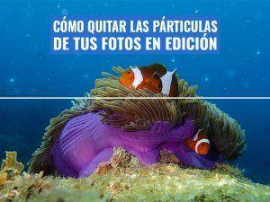 quitar-particulas-fotos-submarinas-edicion-photoshop-gimp