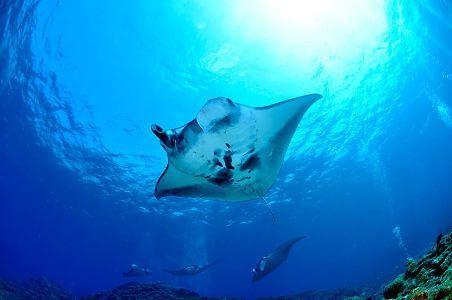viajes de buceo a medida Tailandia