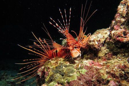 islas-similan-viaje-de-submarinismo-tailandia
