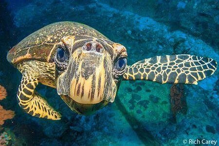 viaje-de-buceo-islas-similan-vida-a-bordo-grupo-tortuga