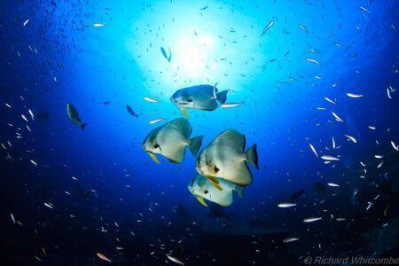 viaje-de-buceo-similan-islands-vida-a-bordo-grupo-fish
