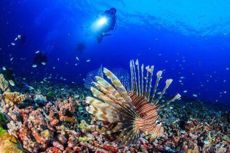 viaje-de-buceo-similan-islands-vida-a-bordo-grupo-lionfish