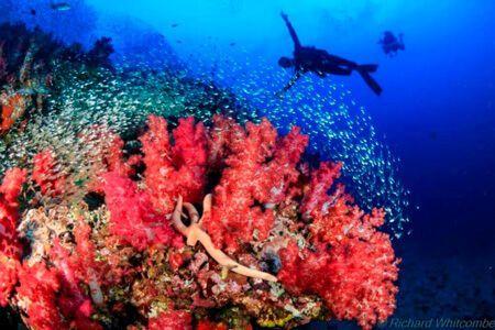 viaje-de-buceo-similan-islands-vida-a-bordo-reef