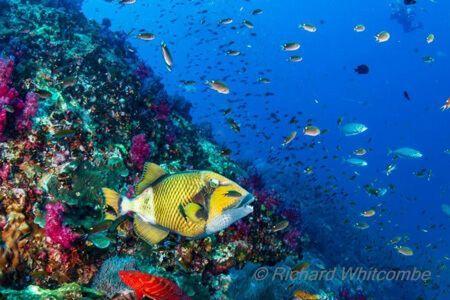 vida-a-bordo-en-similan-islas-viaje-de-buceo