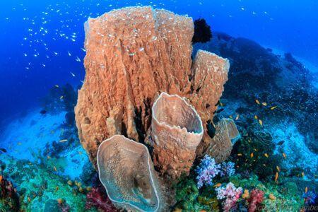 vida-a-bordo-islas-simila,-viajar-buceo-3-trees