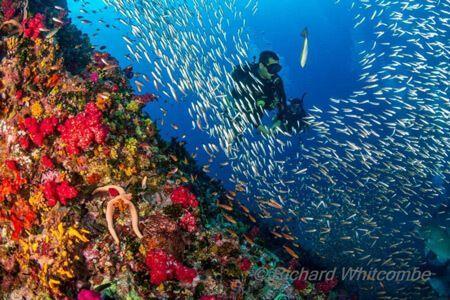 vida-a-bordo-similan-viajar-buceo-submarinismo
