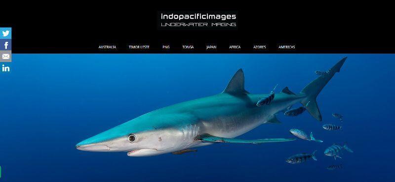 blog de fotografia submarina (8)