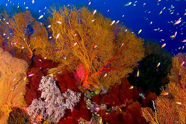viaje de buceo a anilao curso fotosub foto by buceo filipinas 3