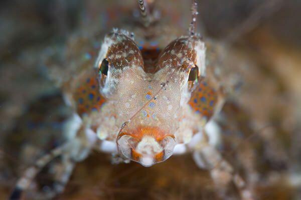 viaje de buceo lembeh y bunaken curso de fotografia submarina Dragonet by Kathrin Heussner