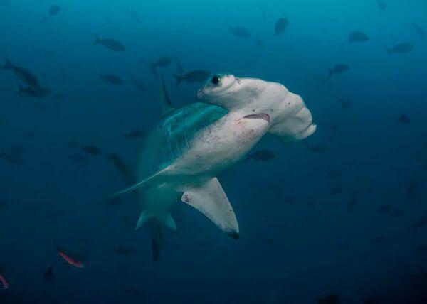 viajes-de-buceo-fotografia-submarina-foto-de-Scuba-Junkie
