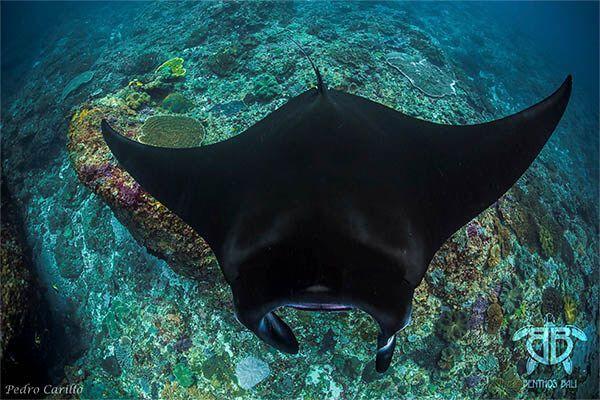 viaje de buceo a bali indonesia curso fotosub 12