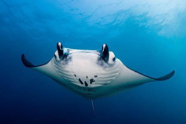 viaje de buceo a bali indonesia curso fotosub 2