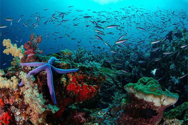 viaje de buceo a bali indonesia curso fotosub 22