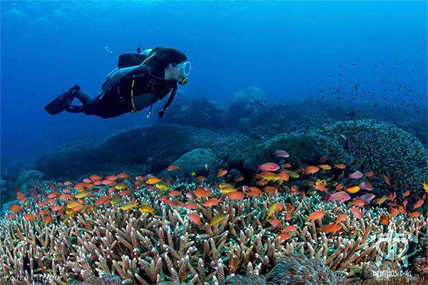 los fondos marinos para tu curso de buceo en indonesia