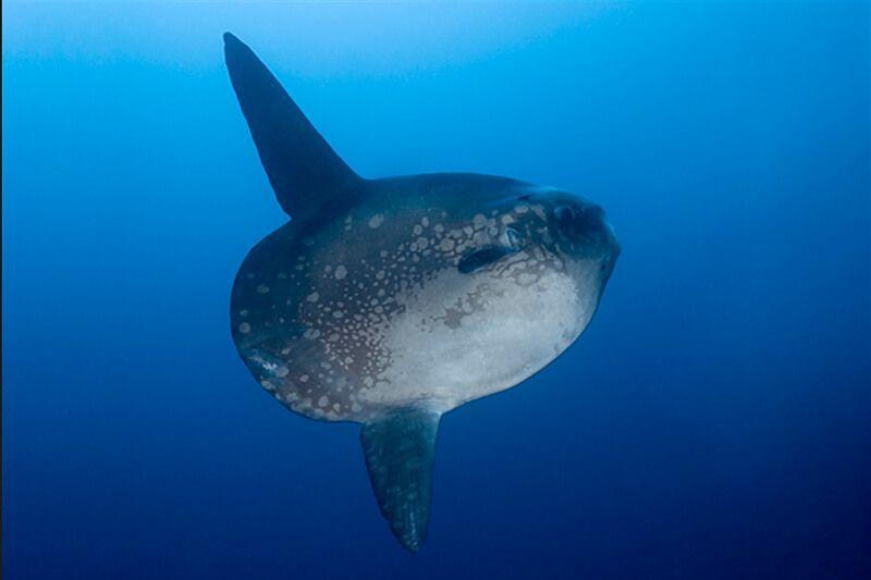 viaje de buceo a bali indonesia curso fotosub